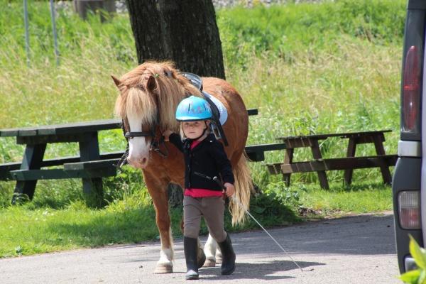 brave pony kopen